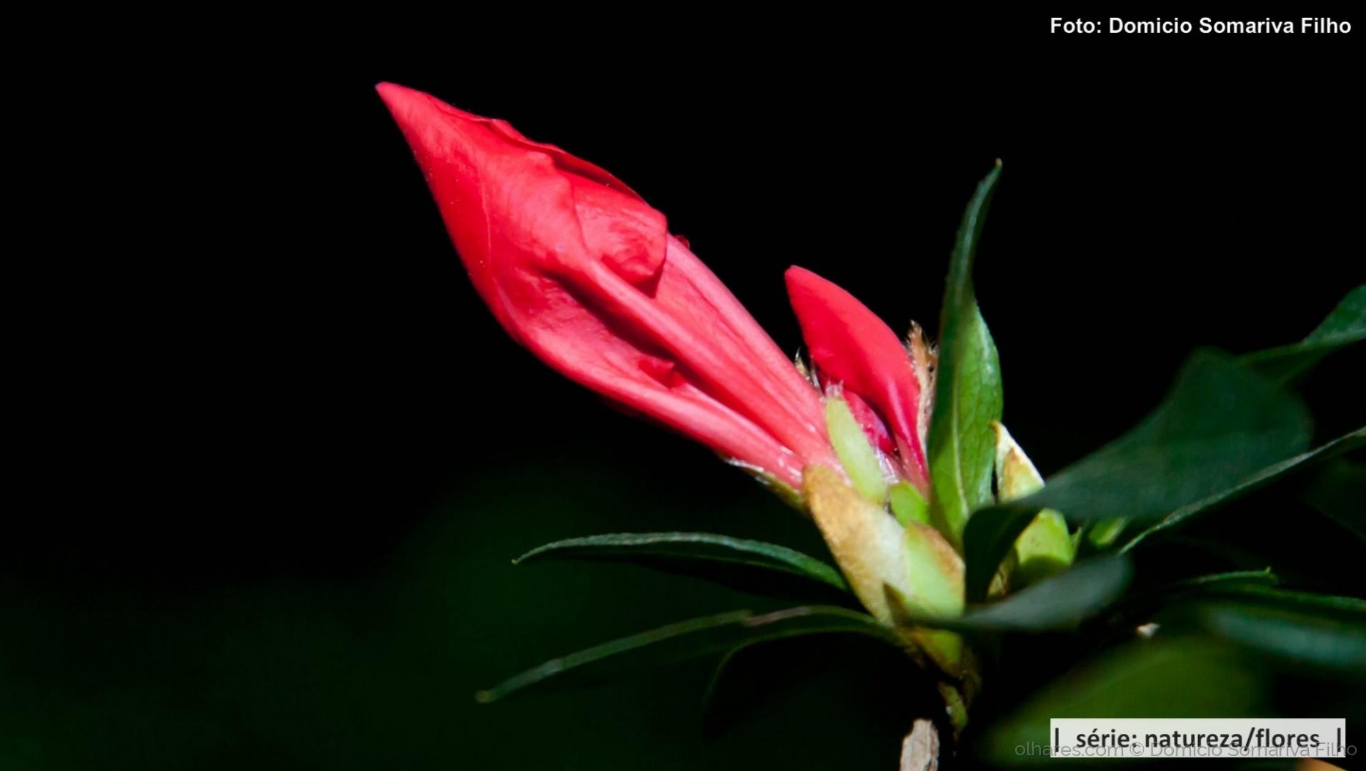 Outros/Flor vermelha (botão)