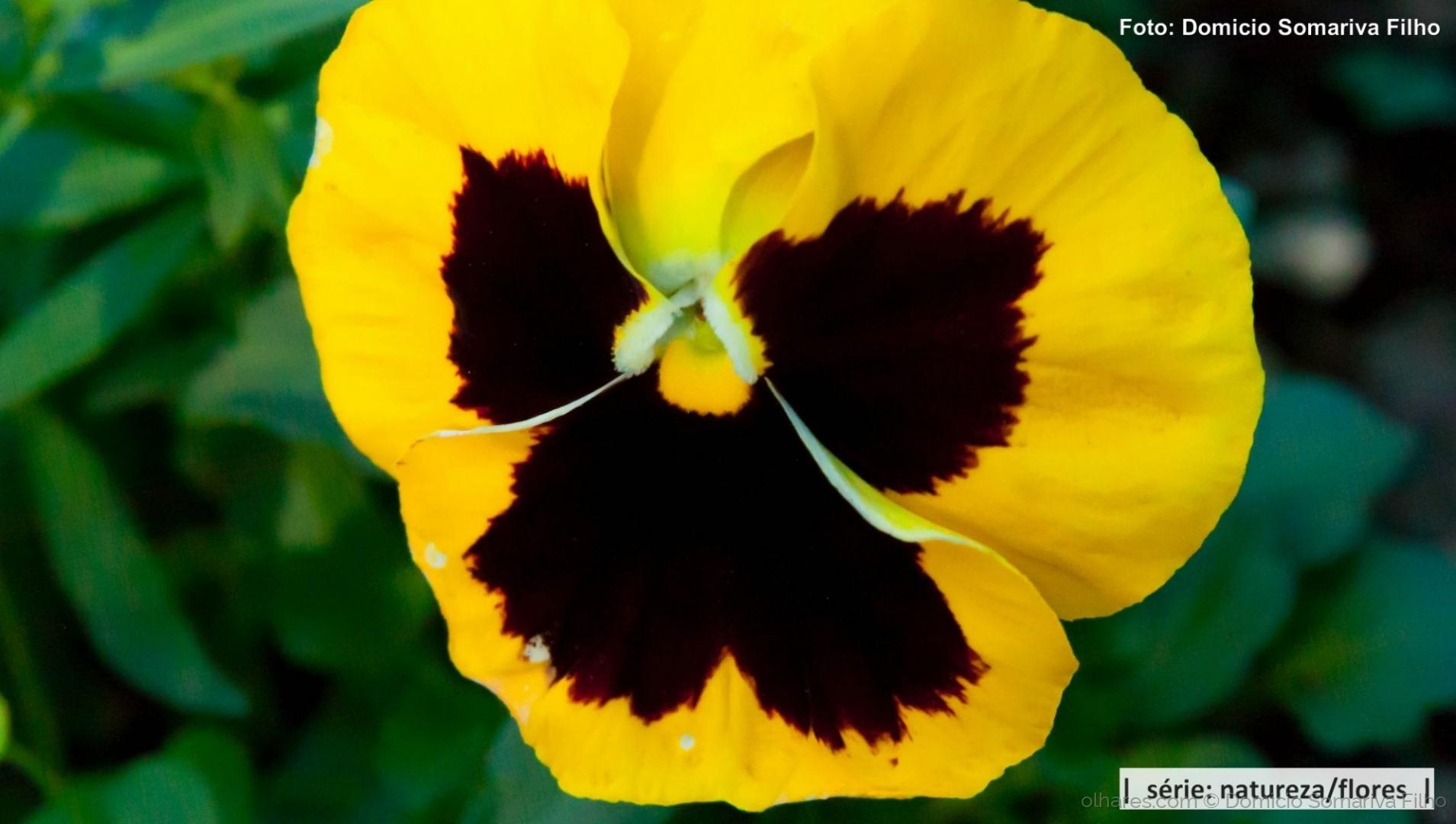 Outros/Flor (Amarelo e preto)