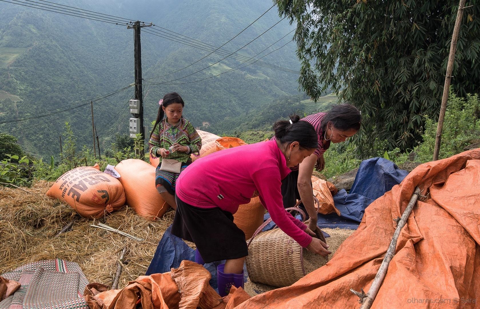 Gentes e Locais/...ainda nos Terraços de Arroz (Sapa - Vietname)