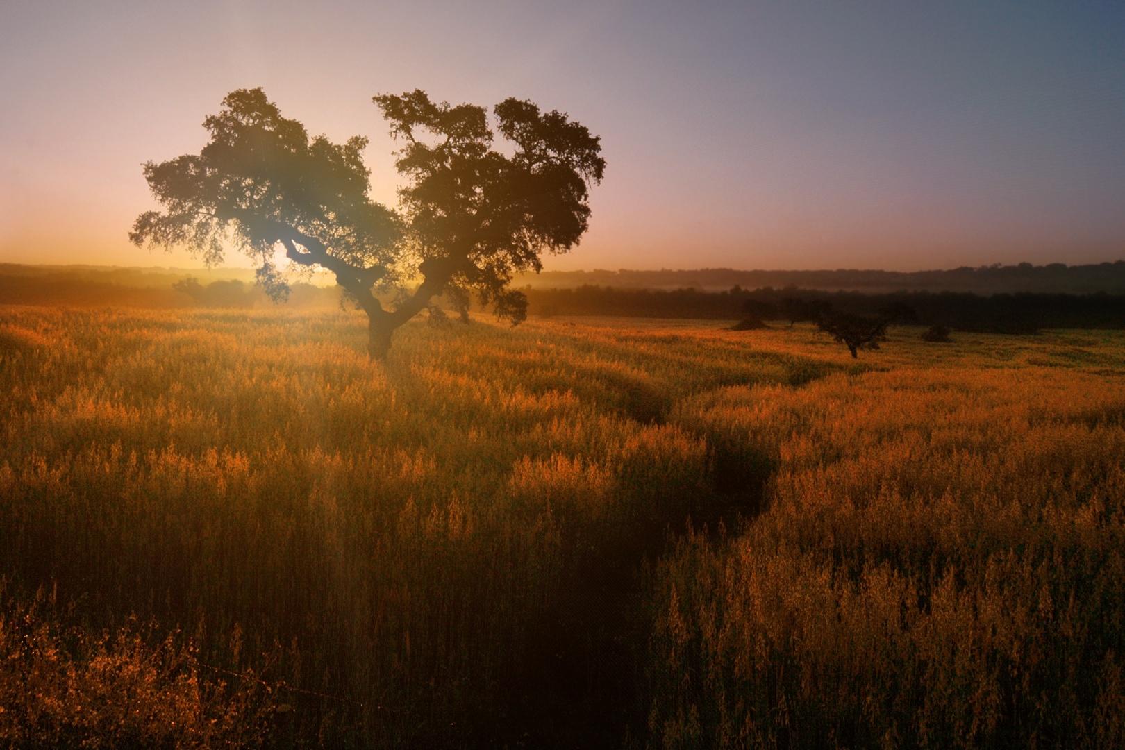 Paisagem Natural/Alentejo ao amanhecer