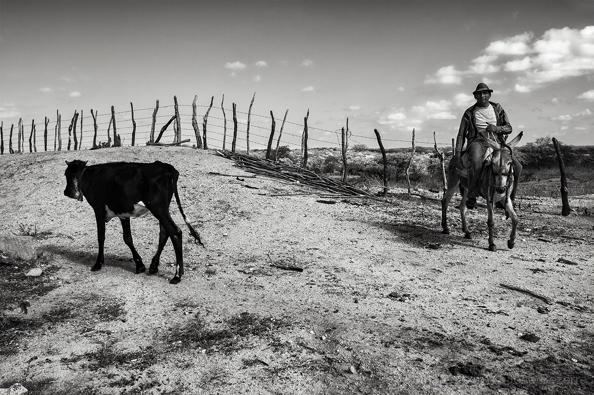 Fotojornalismo/Vaqueiro da região oeste....