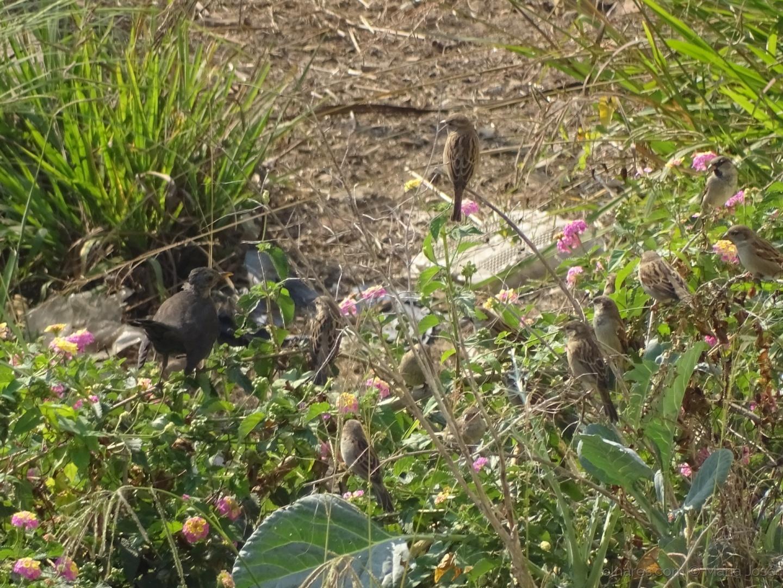 Animais/O jardim dos passarinhos ...e não só