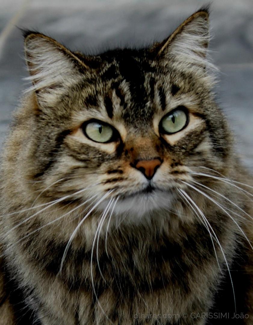 Outros/Queridos Gatos! O Livro - Ler Desc