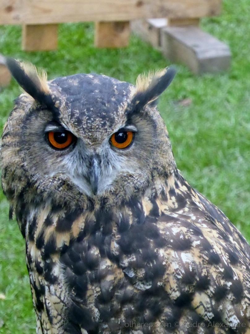 Animais/Olhos grandes e frontais