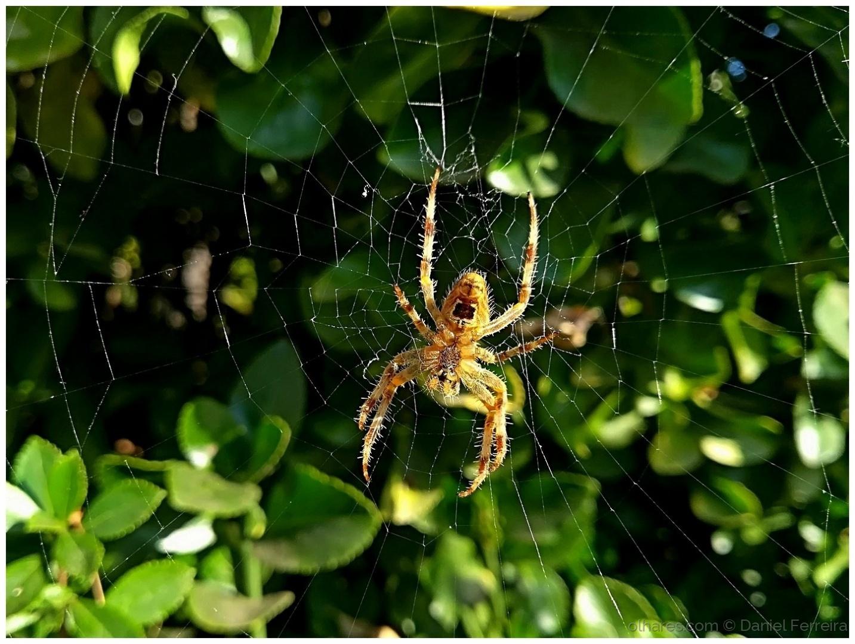 Animais/Aranha tecendo a teia