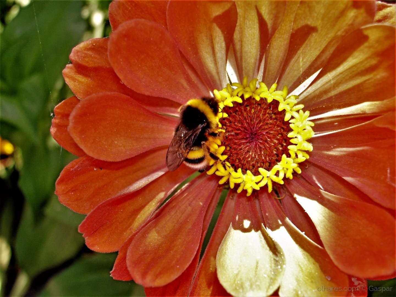Outros/A Abelha e a Flor!