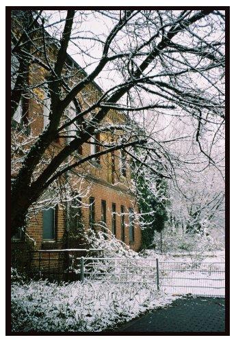 Paisagem Urbana/Árvores a preto e branco