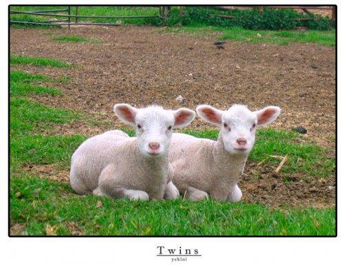 Outros/Twins