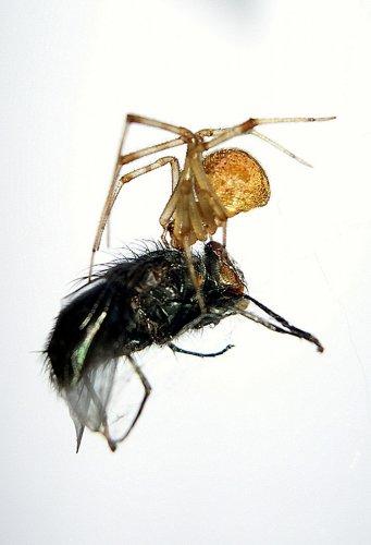 Macro/10 - O Beijo da Aranha