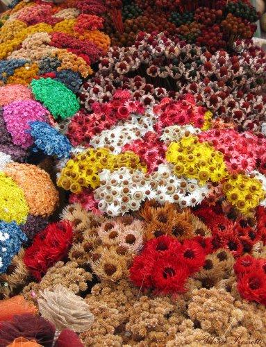 Flores Secas Foto De S Lvia Rossetto Olhares