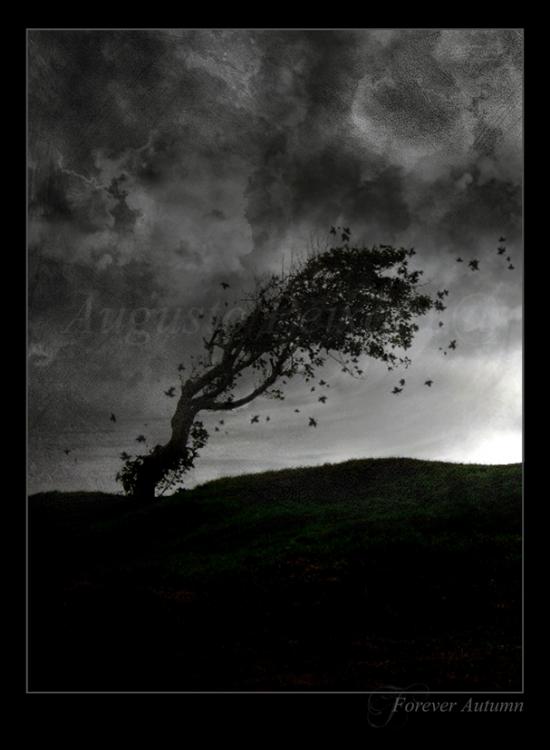 Arte Digital/Forever Autumn