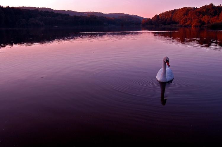 Paisagem Natural/Lago dos Cisnes...