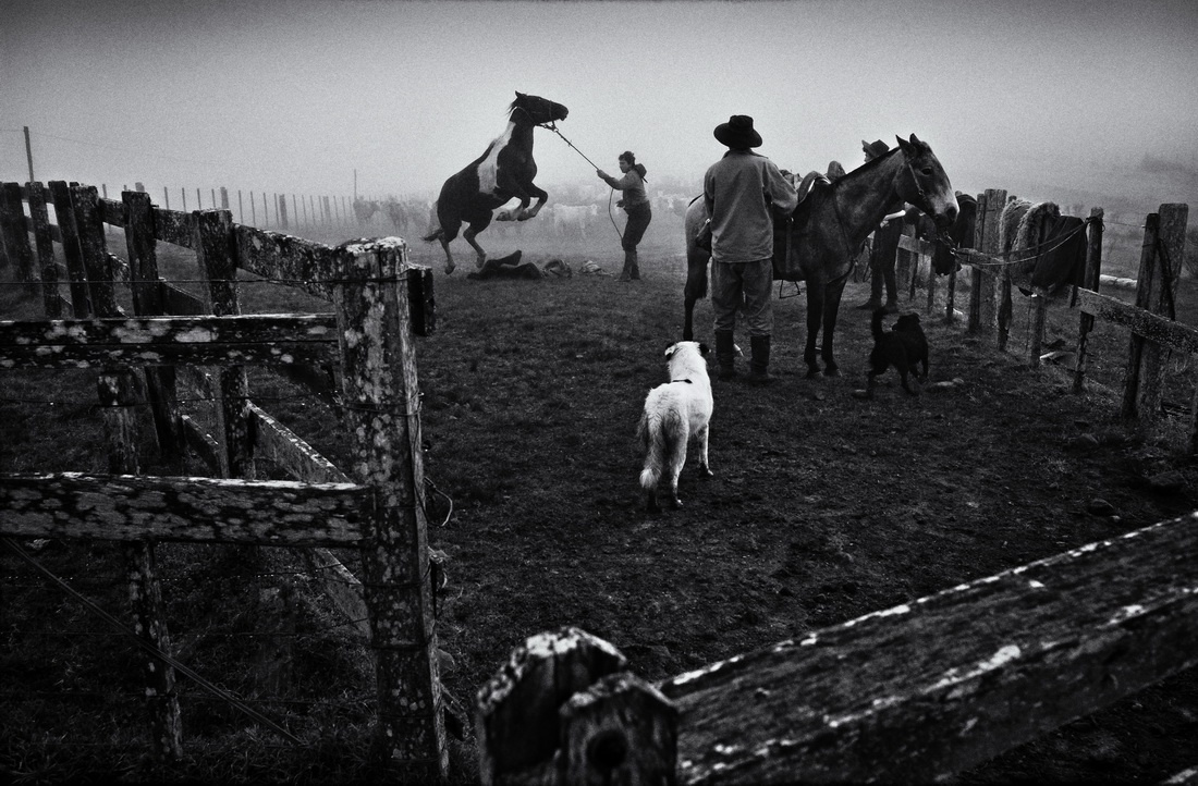 Fotojornalismo/Um Perro  Latindo ao Amanhecer