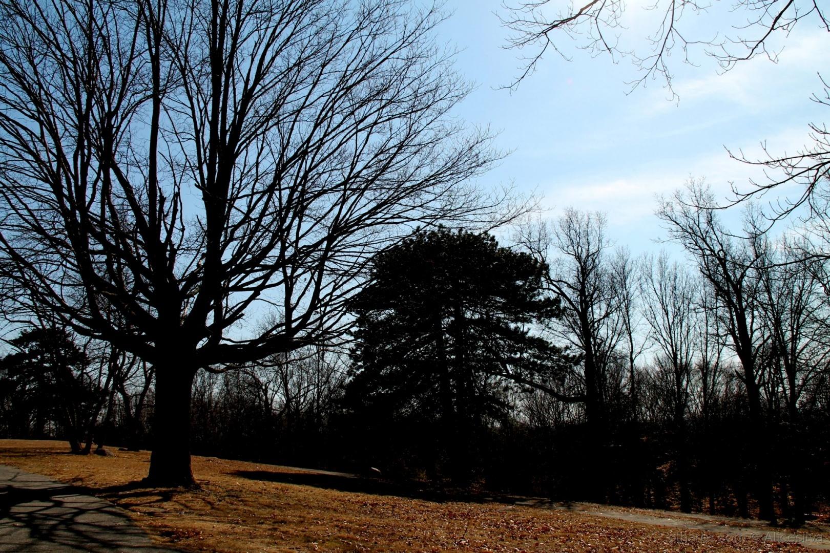 Paisagem Natural/Todos gostam de sombra, mas poucos plantam árvores