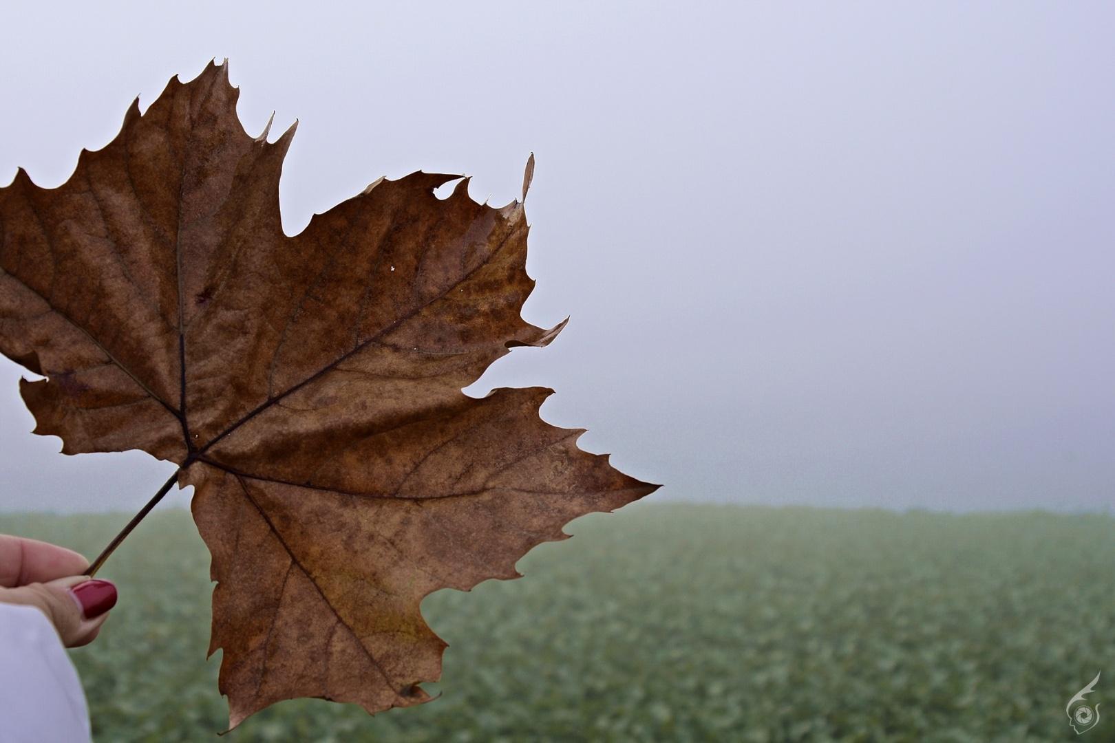 Outros/Outono meu...