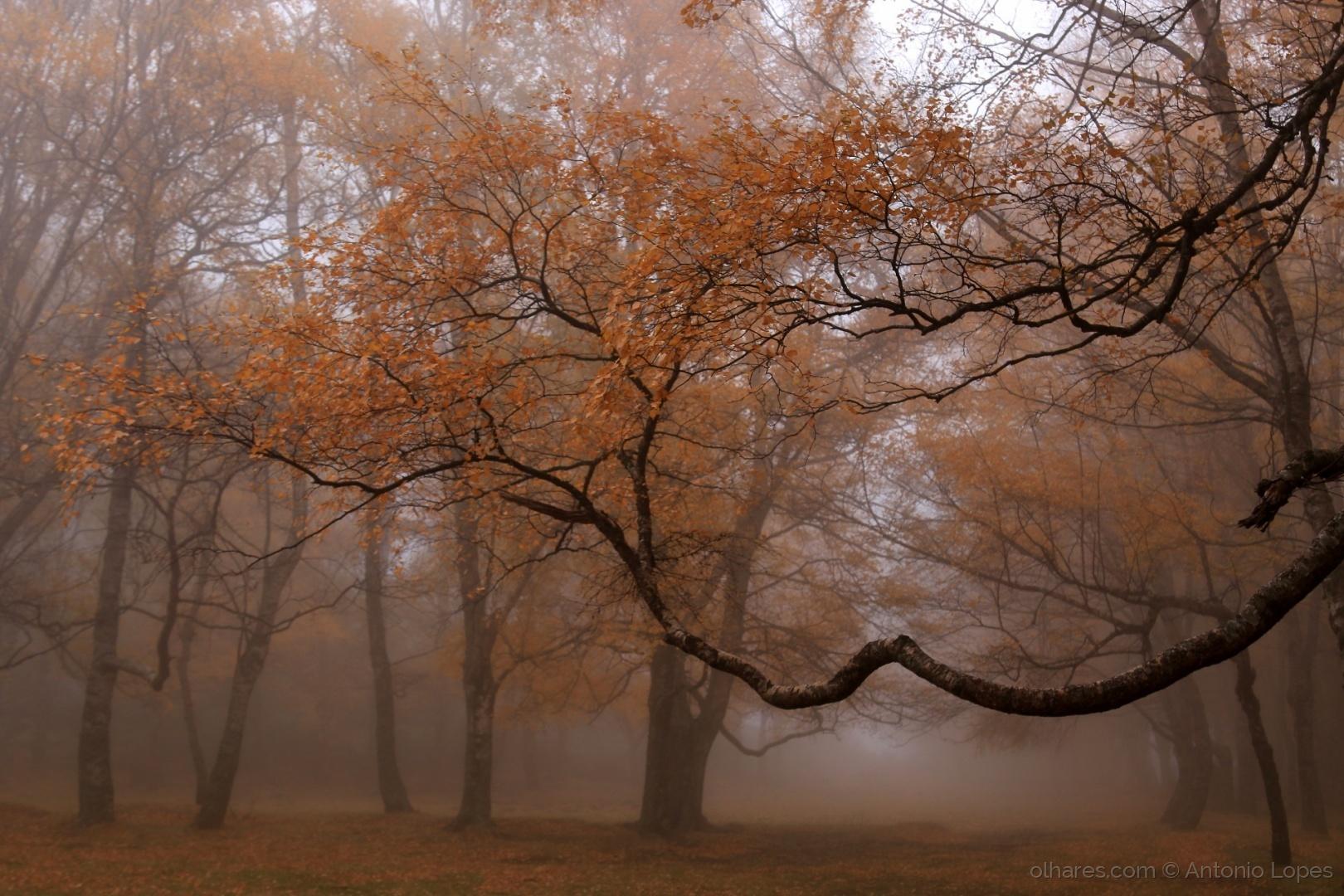 Paisagem Natural/Bruma no Bosque...
