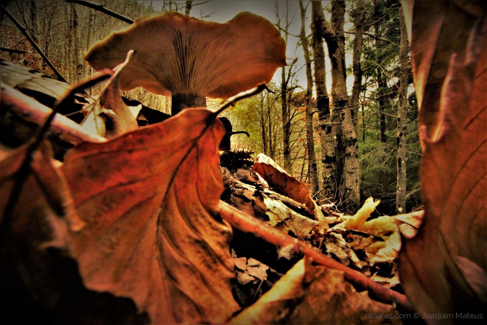 Paisagem Natural/Outono/Inverno