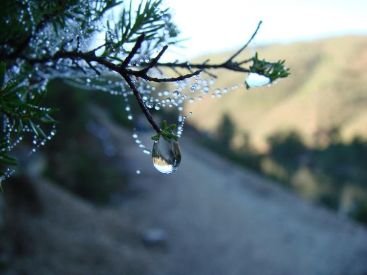 Macro/Belo Efeito De Árvore De Natal...
