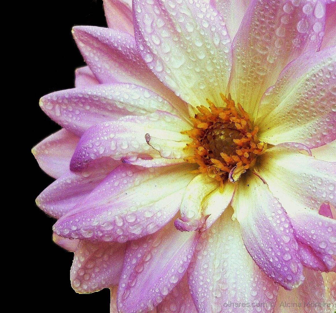 Macro/La fleur qui pleure