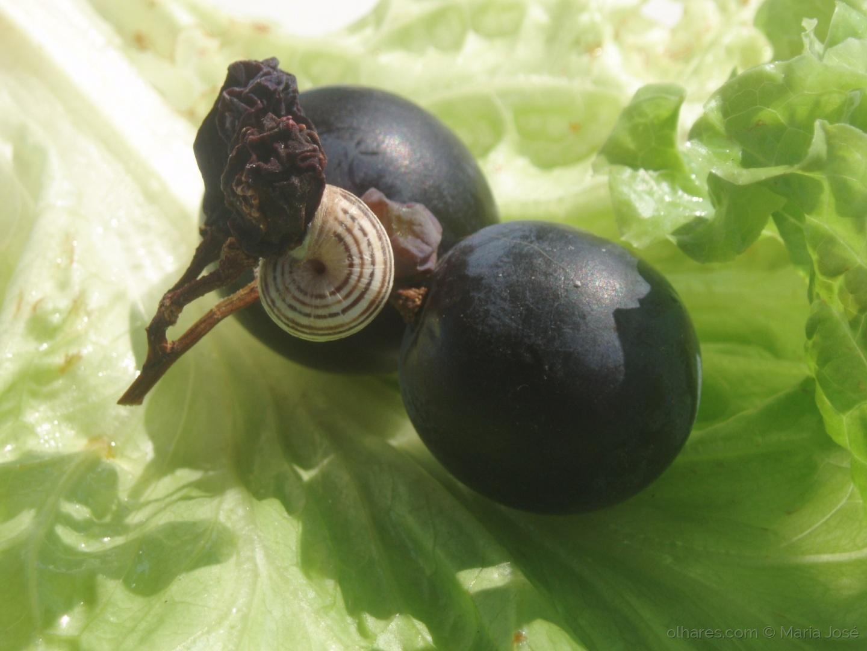 Macro/As uvas e o caracol  (ler pf)