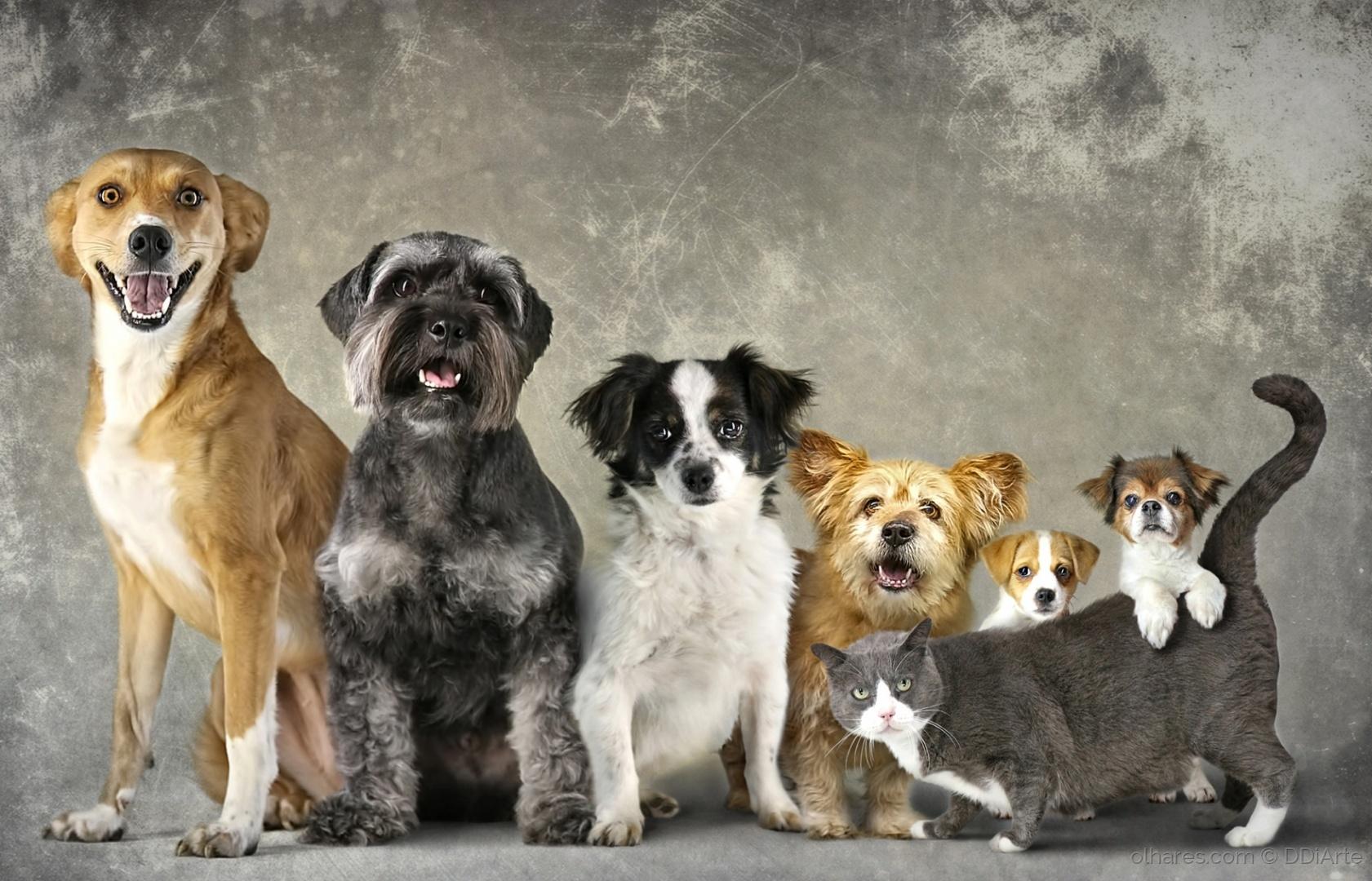 Animais/Gato e Cães