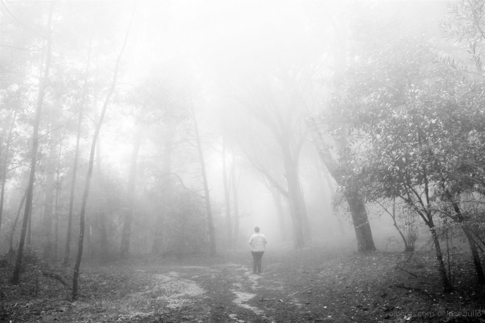 Paisagem Natural/Mist