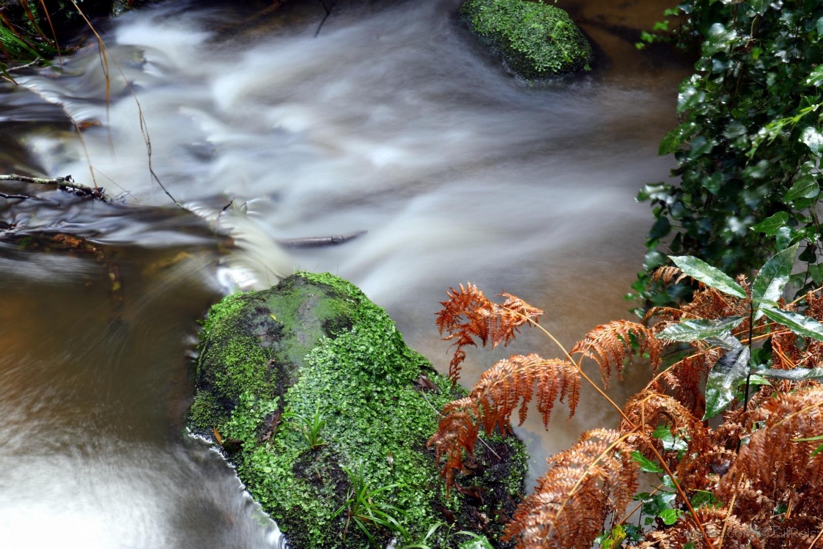 Paisagem Natural/Águas na mata
