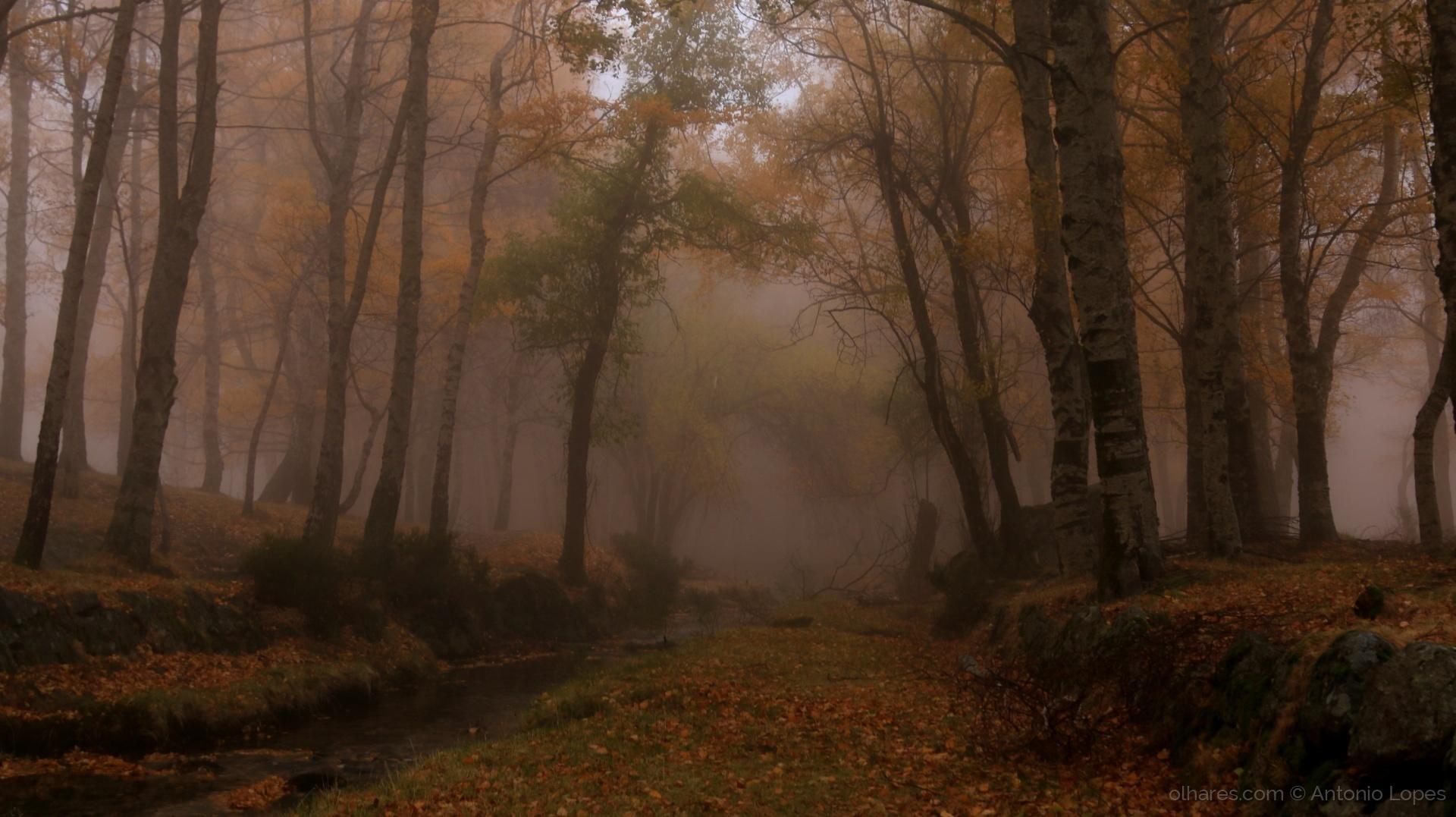 Paisagem Natural/Bruma no Bosque III