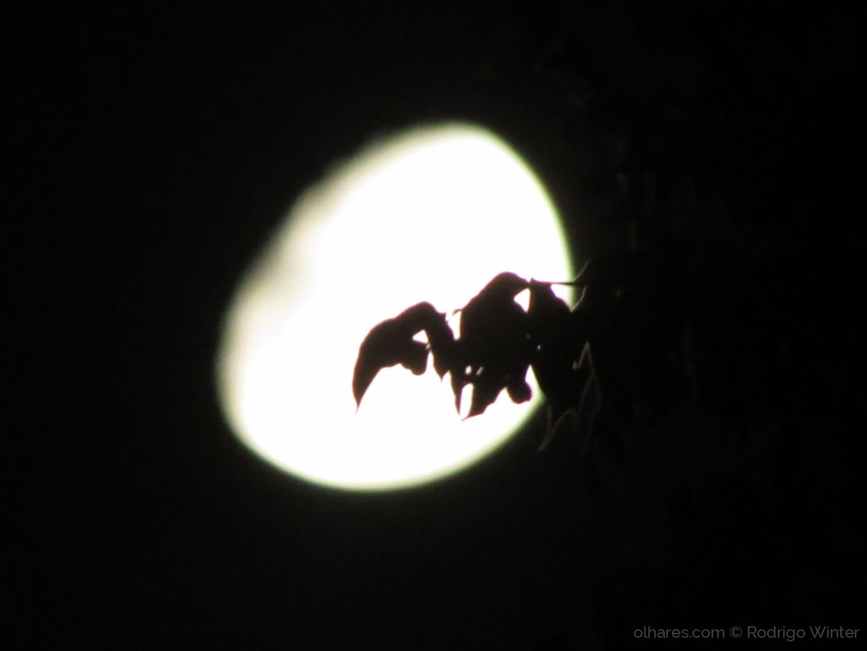 Outros/Pássaro da Noite