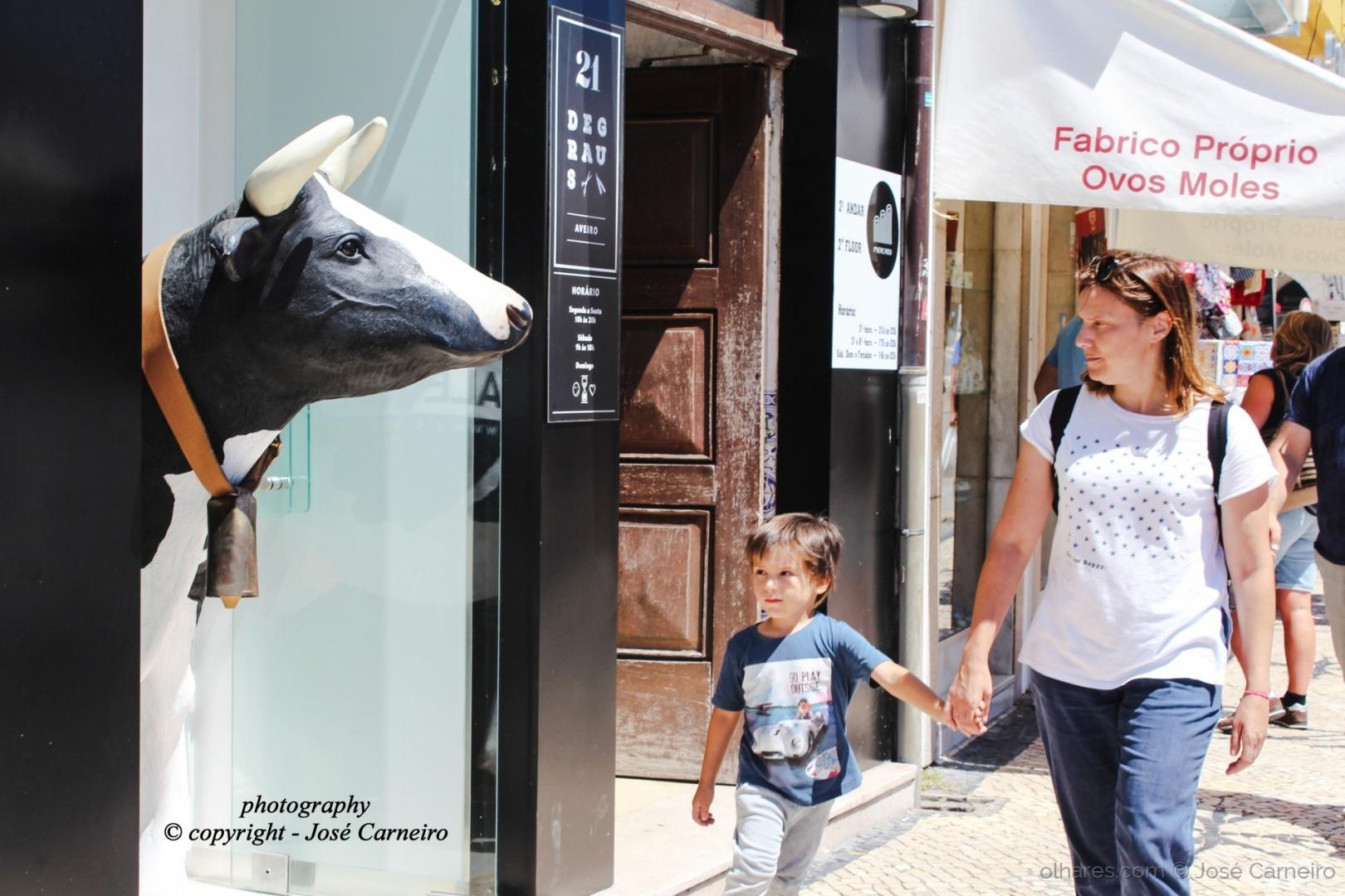 """Gastronomia/"""" OLHARES DE BOVINO ... mãe, quero leitinho """" III"""