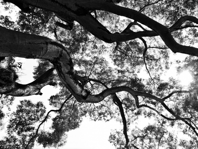 Abstrato/Árvore da Vida