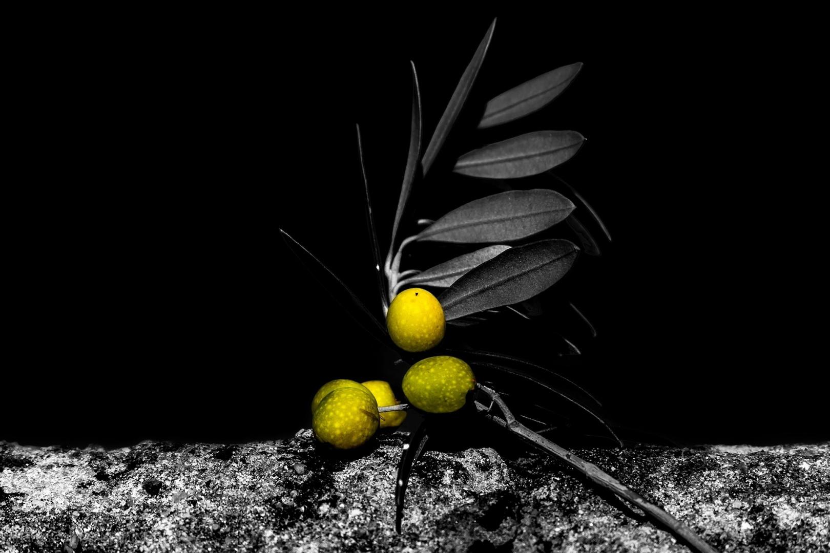 Arte Digital/natureza viva