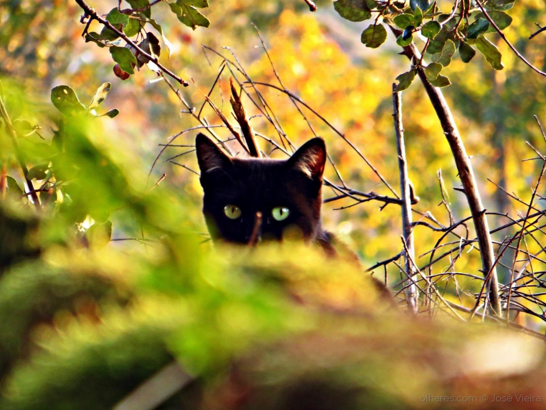 Animais/De olho em ti