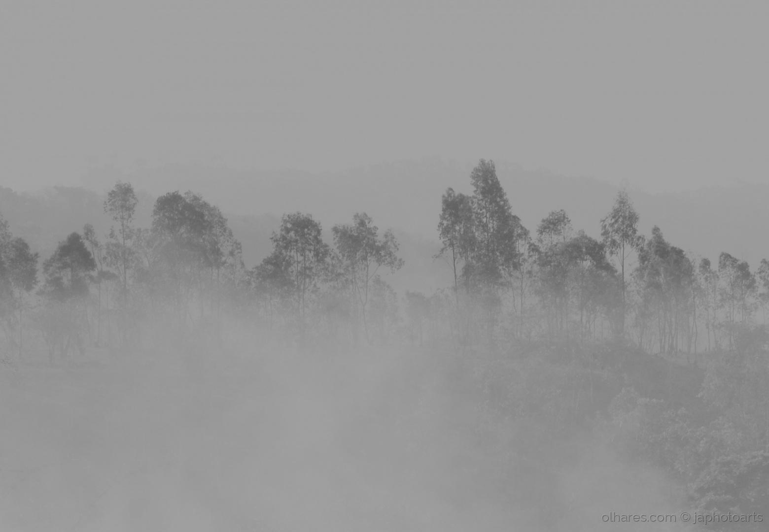 Abstrato/Névoa