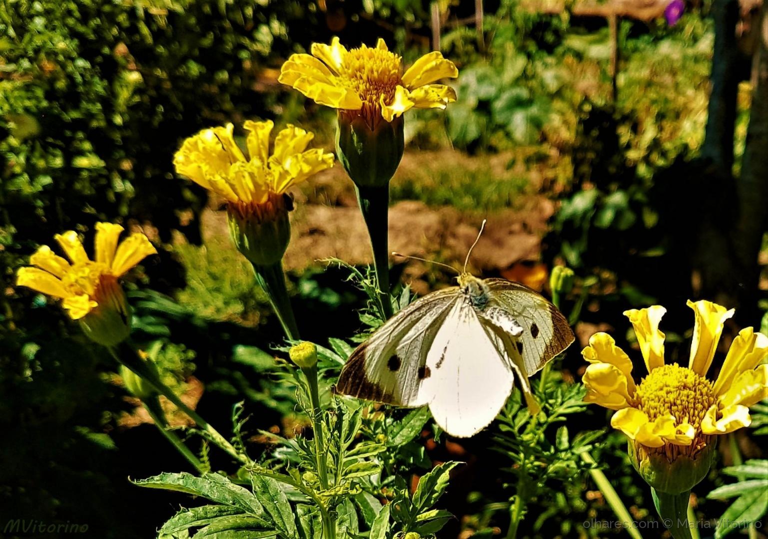 Macro/Saudades das borboletas (ler sff)