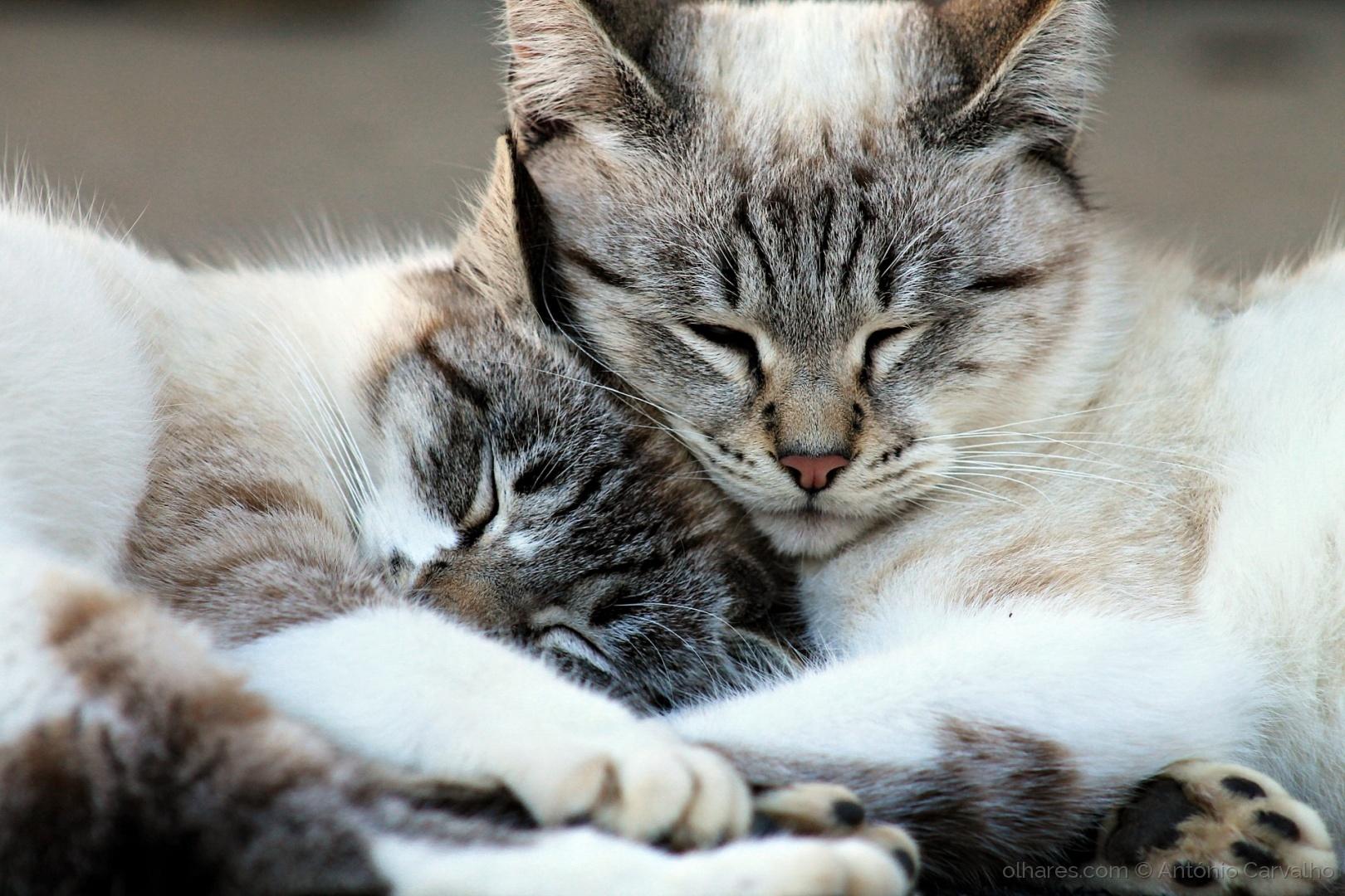 Animais/O amor é assim (ler)