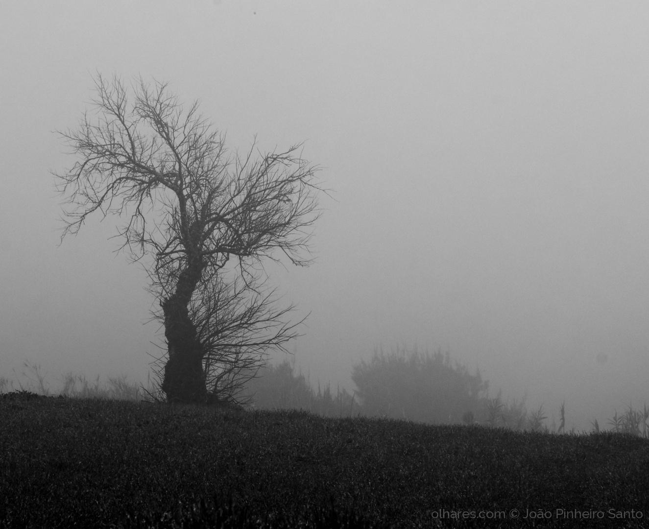 Outros/No meio do nevoeiro!!