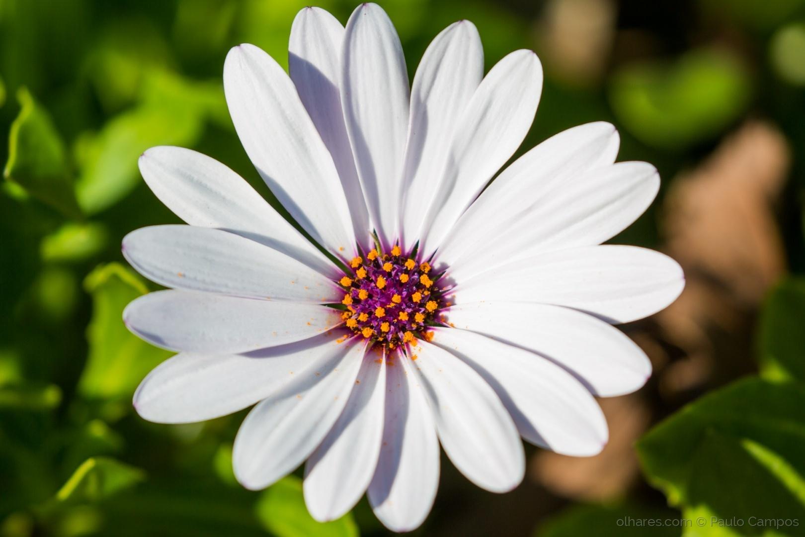 Paisagem Natural/Uma flor para a minha flor