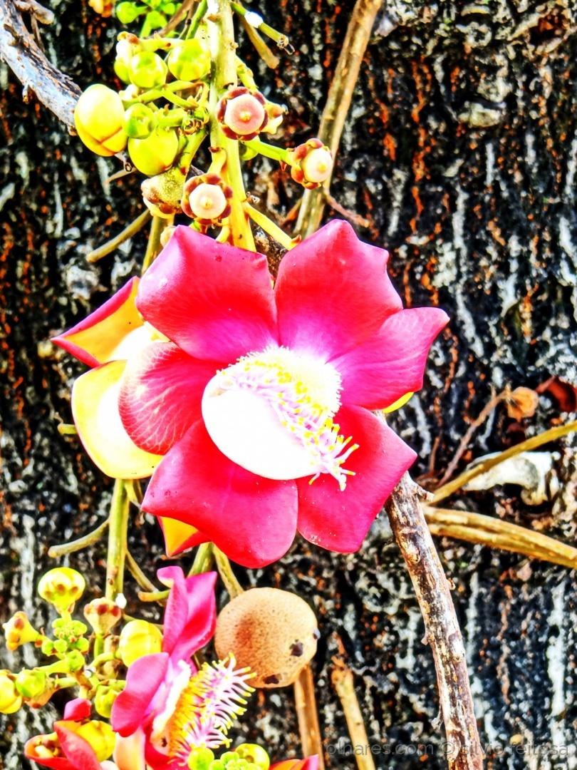 Macro/As flores não morrem