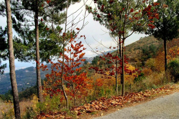 Paisagem Natural/Outono...
