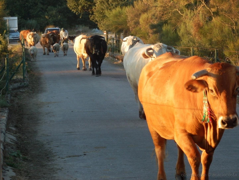 Fotojornalismo/Portugal rural