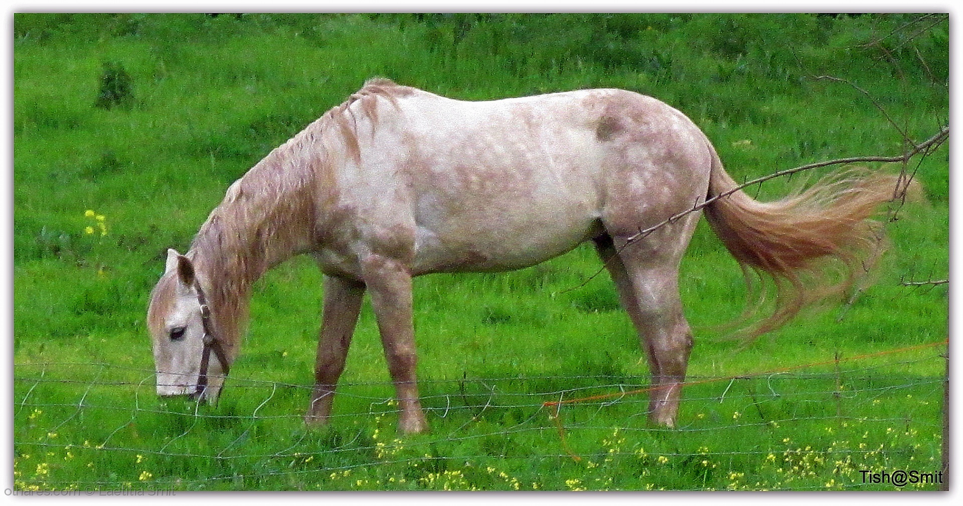Paisagem Natural/The gypsy's horse