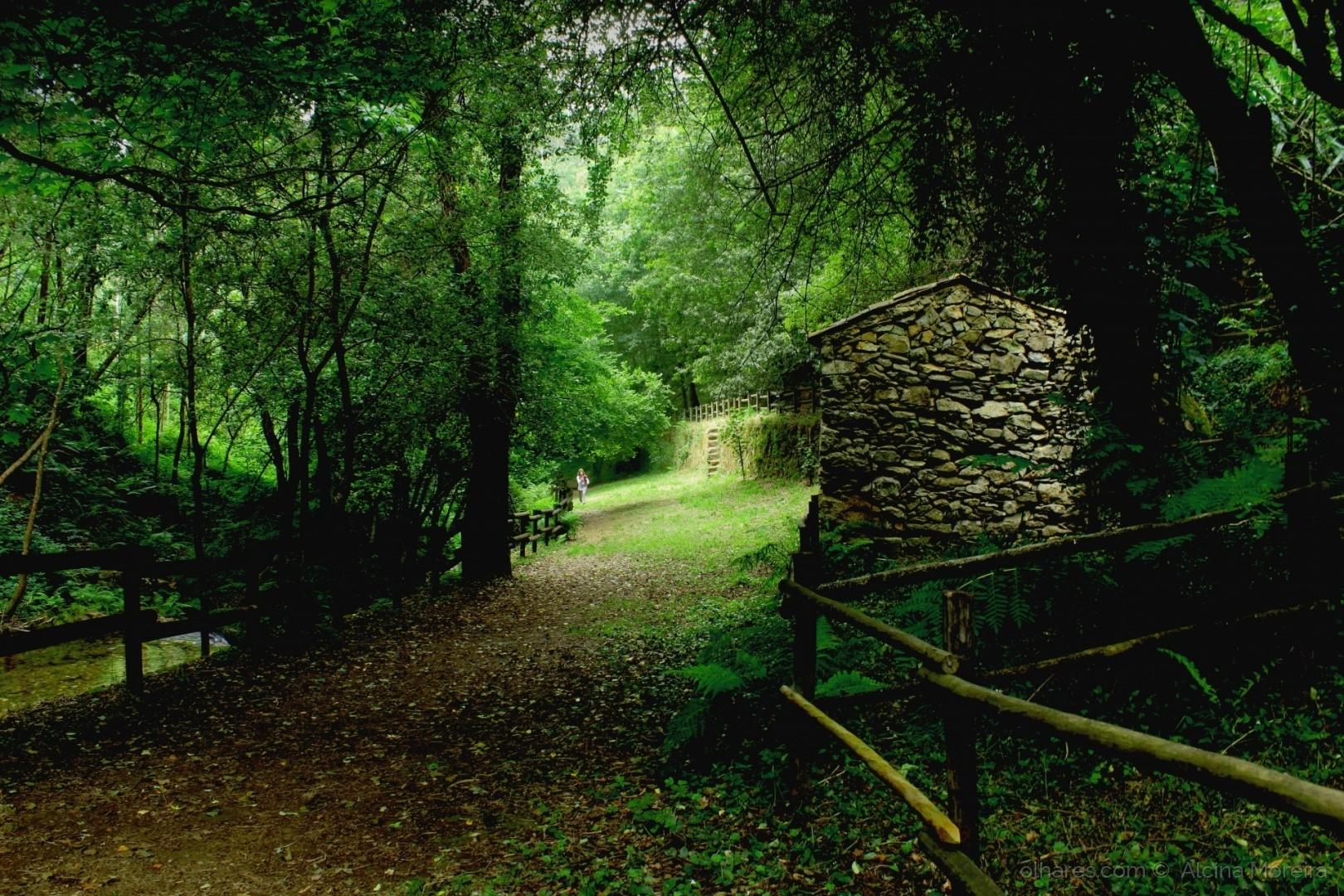 Paisagem Natural/A casinha da floresta