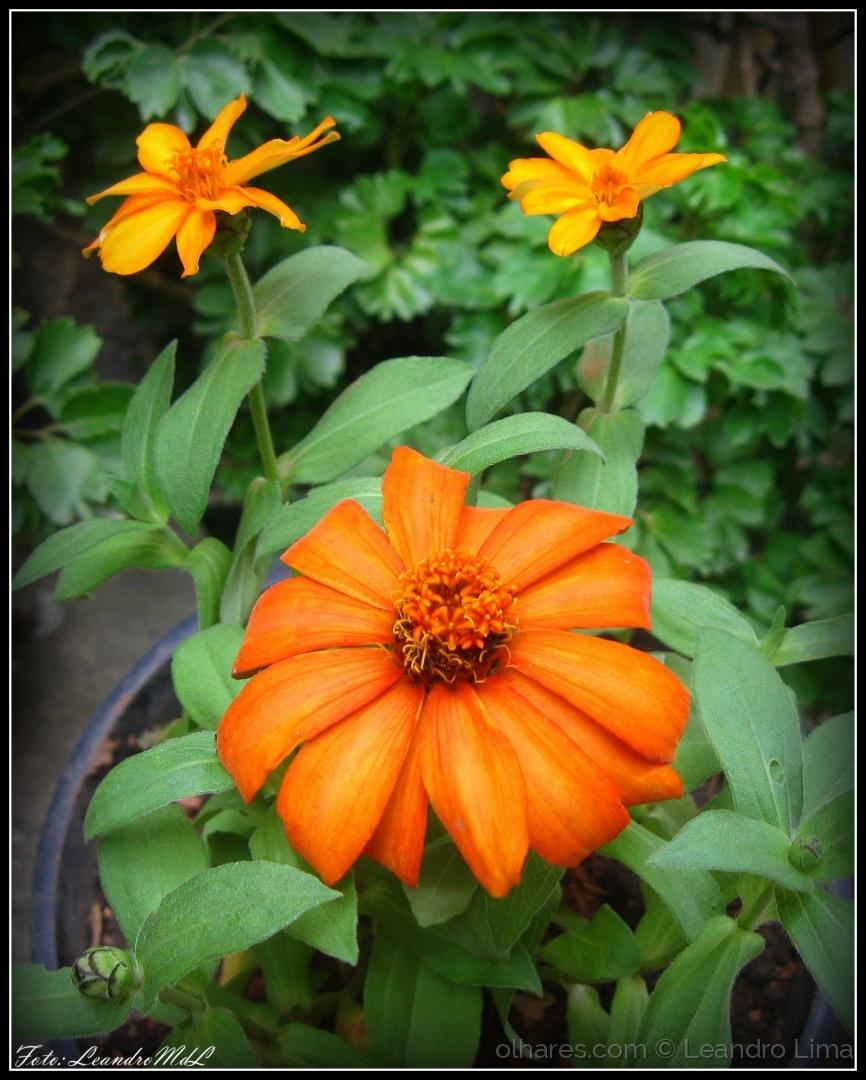 Macro/Flores do meu jardim XIII
