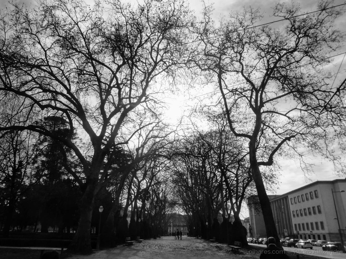 Paisagem Urbana/Jardim da Cordoaria