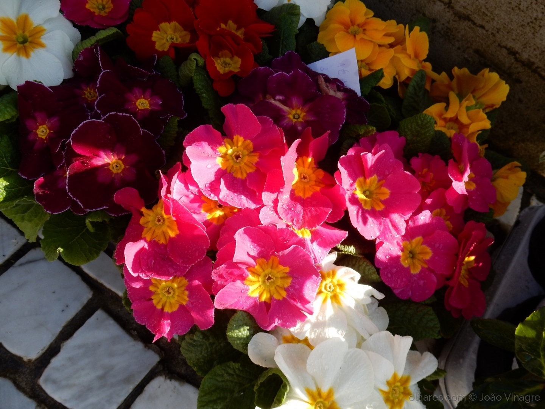 Macro/Flores do Jardim