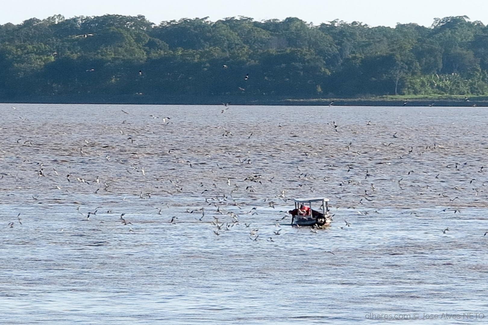 Paisagem Natural/Quanto tem peixe no barco..
