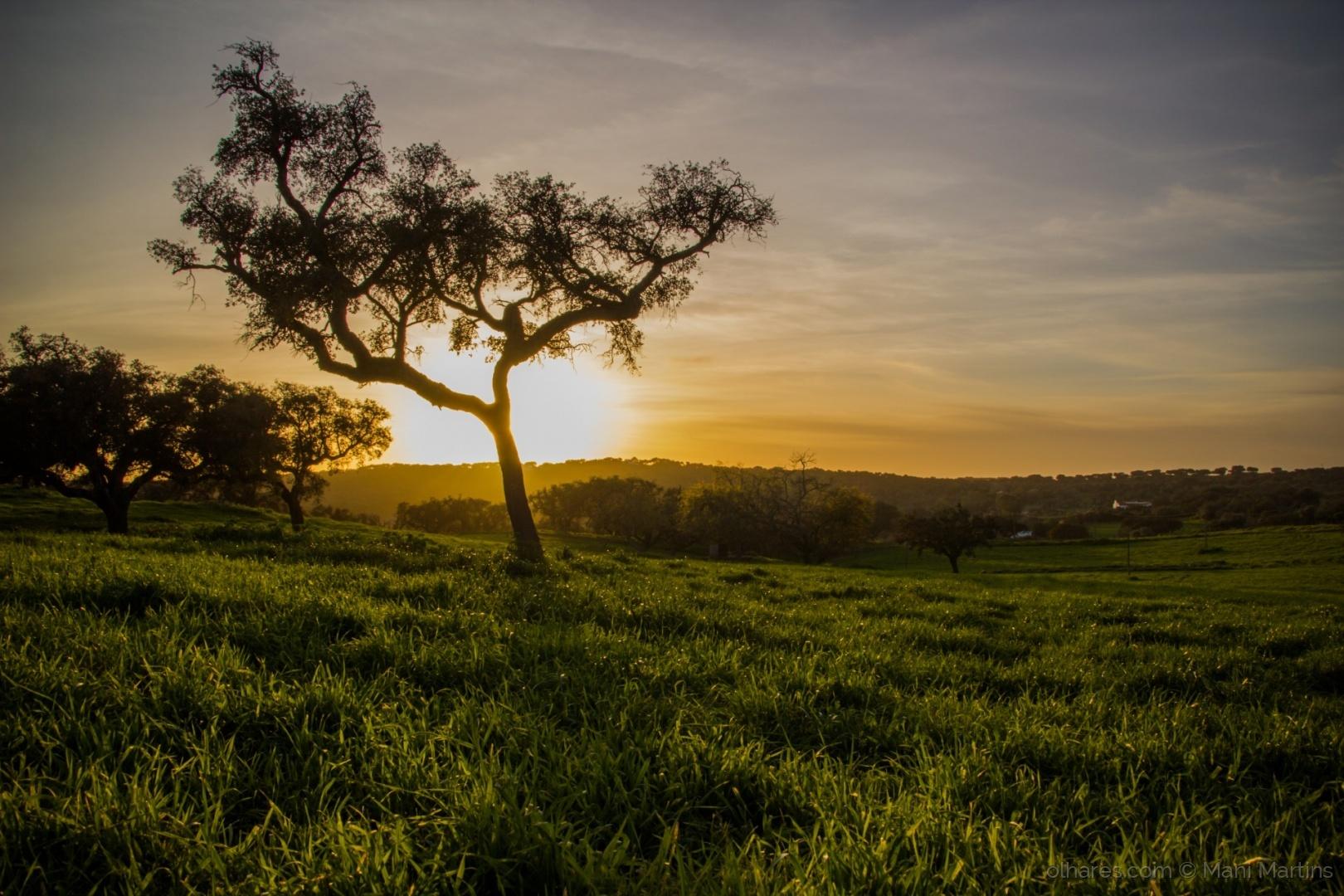 Paisagem Natural/verdes campos