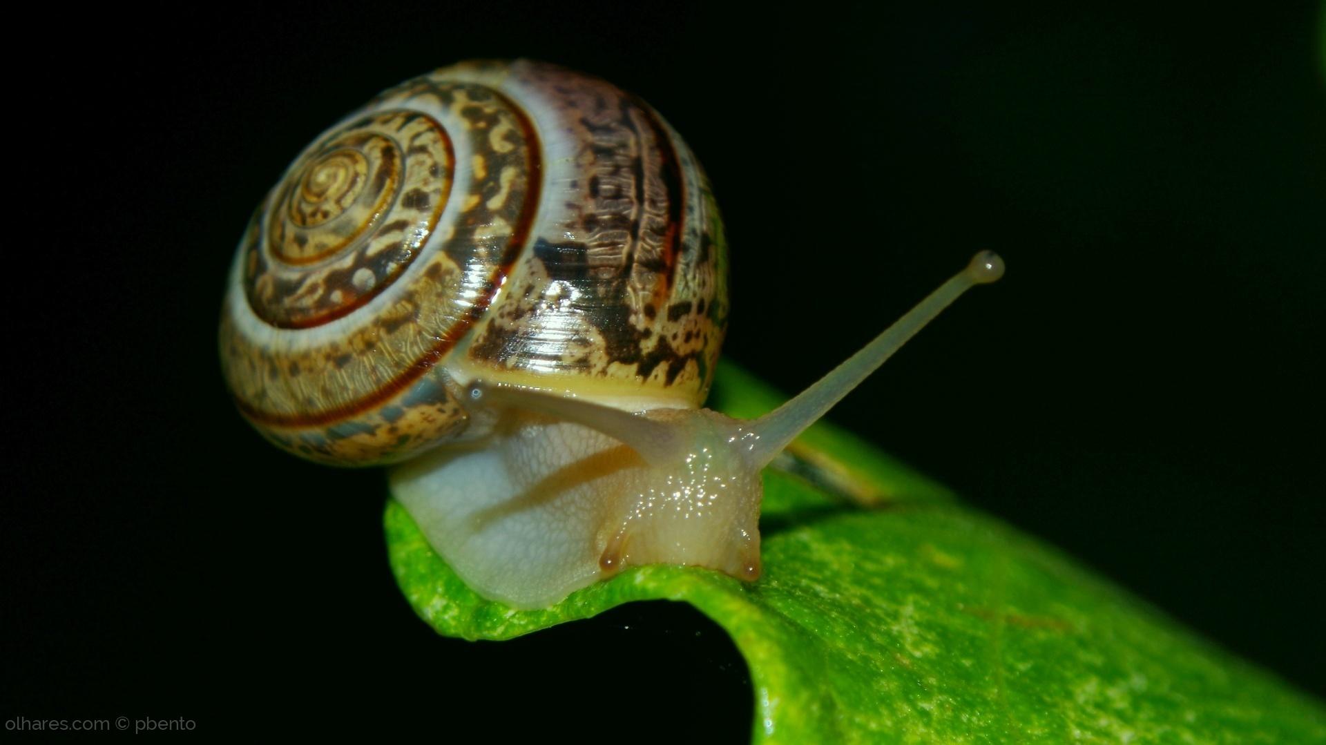 Animais/Snail speed/velocidade de 2ªfeira.
