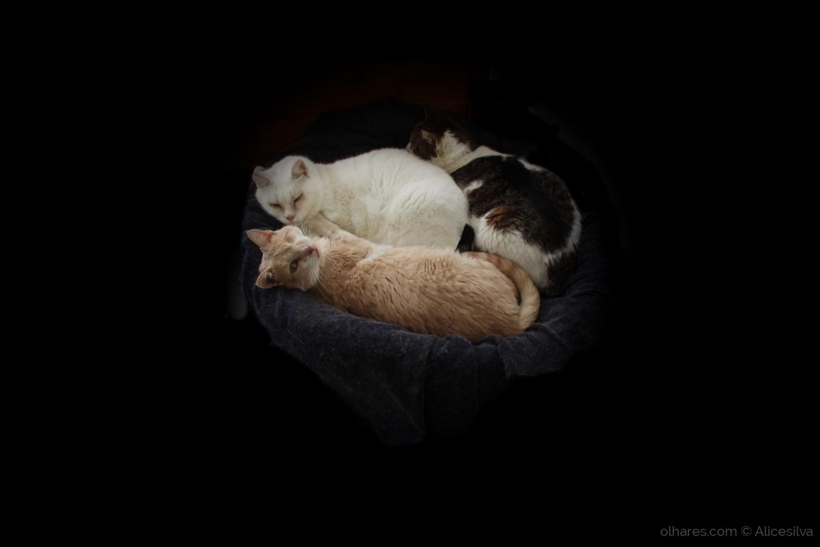 Animais/Os meus três  Gatinhos.